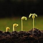 prodotti-fitosanitari-fitoregolarote