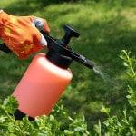 prodotti-fitosanitari-insetticida